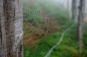 Ecosystem web2